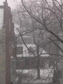 snowybranchespartingshot.jpg