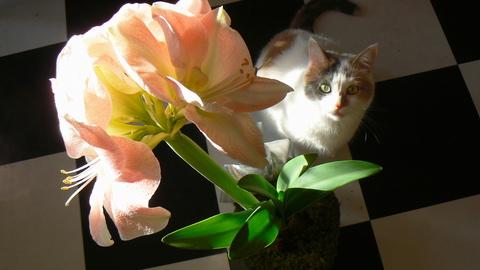 Lily & Friend