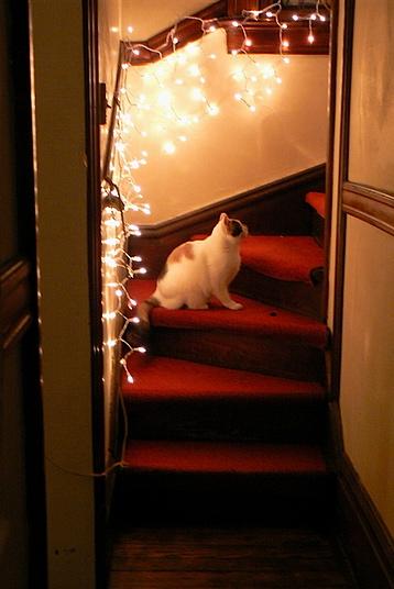 Musa stairs