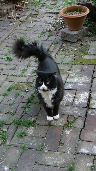path cat